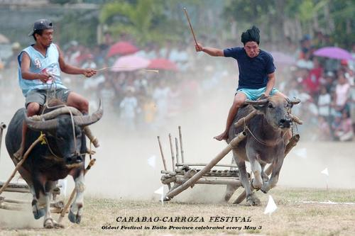 The Carabao-Carroza Race