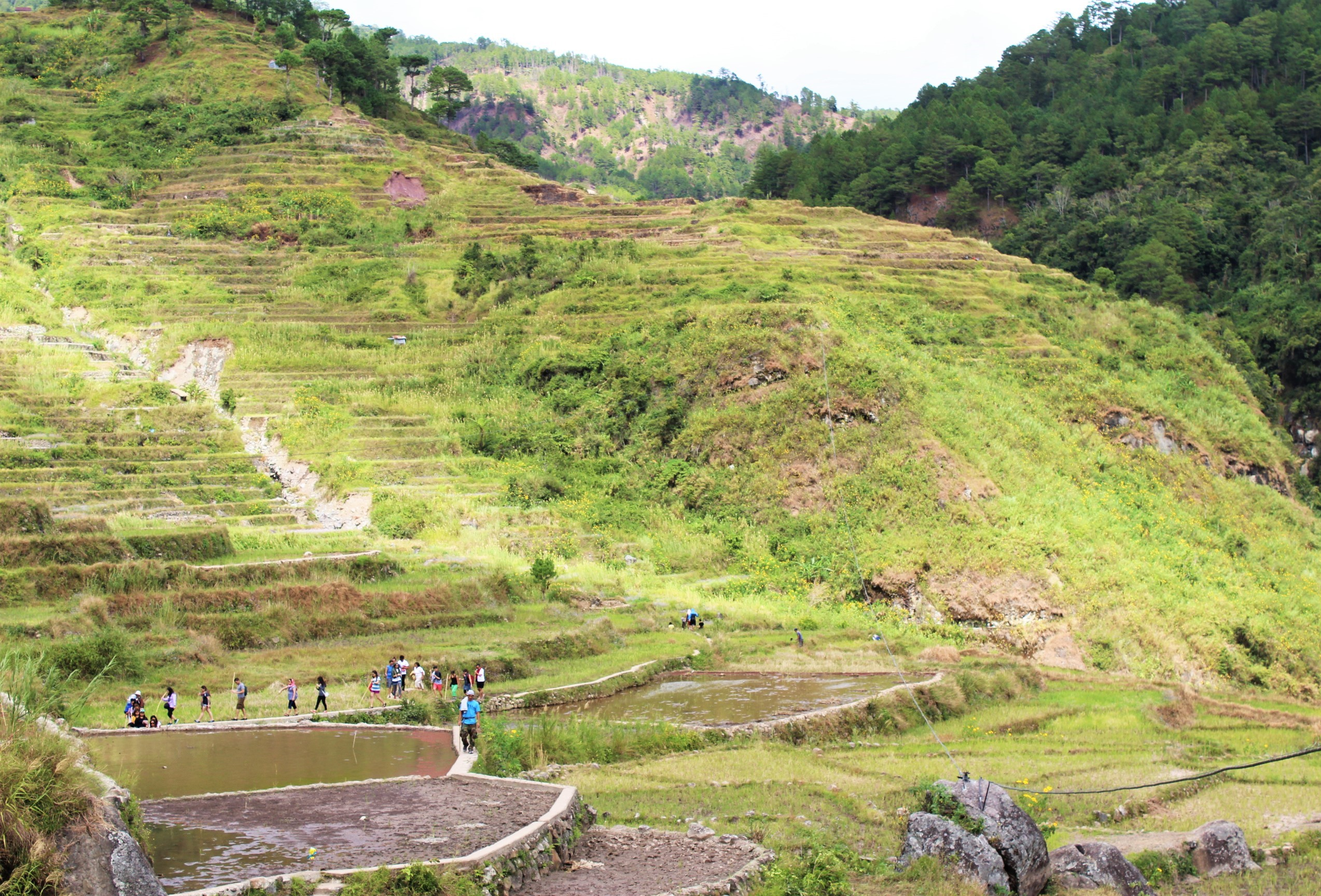 sagada-aguid-rice-terraces-bomod-ok-falls-2
